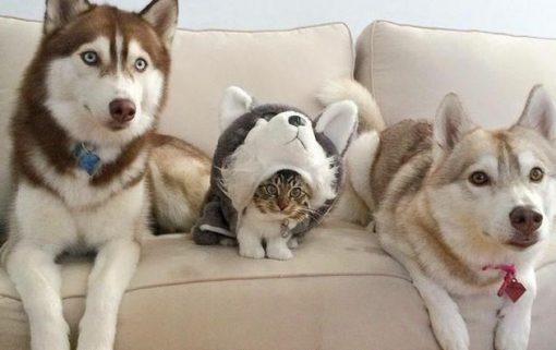 Cat Pretending to Be a Dog