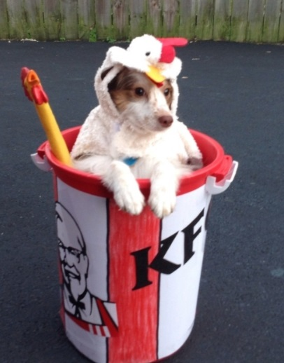 Dog Dresses As a Chicken