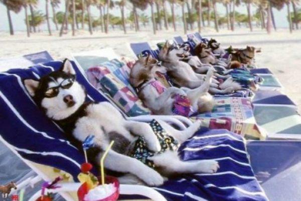 Naughty Beach Dogs