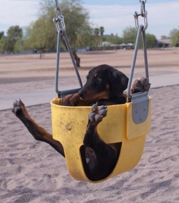Dog in Playground Swing