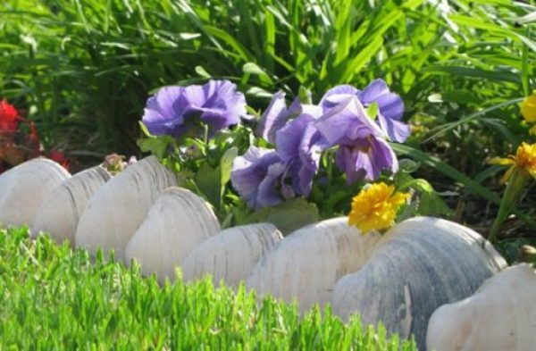 Sea Shells Transformed Into Garden Edging