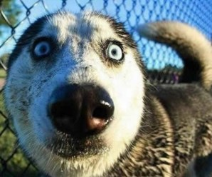 Top 10 Dogs That Have Crazy Eyes