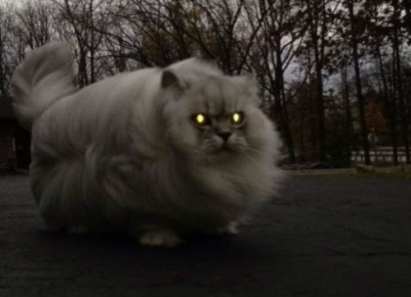 Creepy Looking Cat