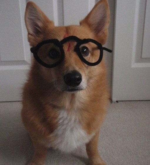 Harry Potter Dog Costume Fail