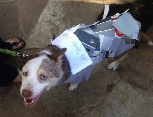 50 Shades of Grey Dog Costume Fail