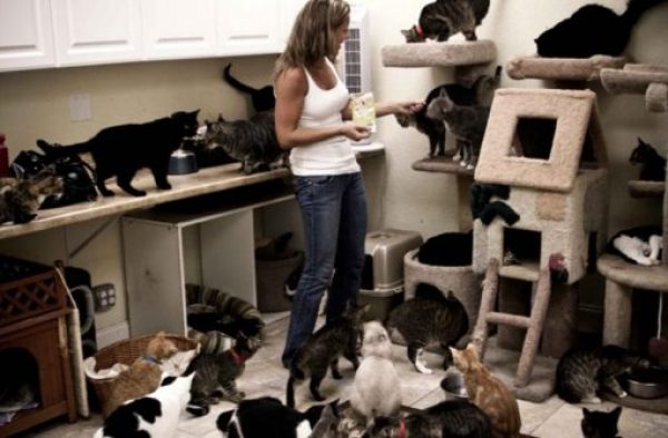 Are you a crazy cat owner? Does this image ring a bell