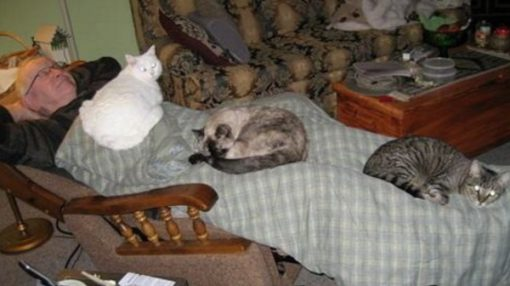 Are you a crazy cat owner? Does this image ring a bell?