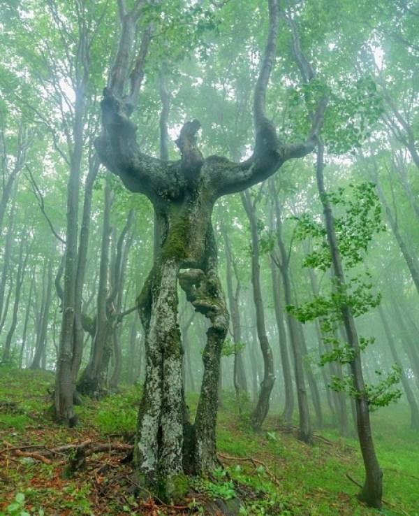 The Woodland Man, Balkan Mountains