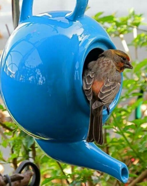 Birdhouse Made From a Tea Pot