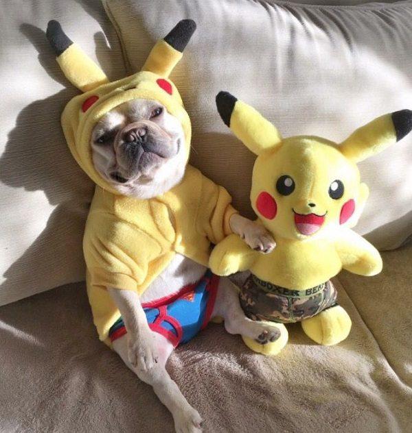 Dog Dressed as Pikachu