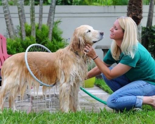 360 Hoop Dog Washer