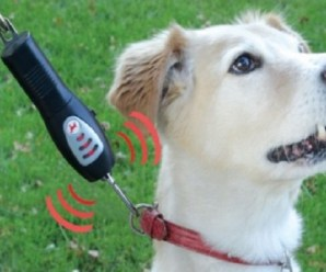 Top 10 Crazy, Useful and Unusual Gadgets for Dogs