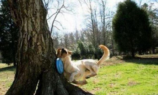 Dog Who Sucks at Fetch