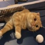 Top 10 Fit & Active Cats Who Love Sports