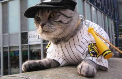 Cat Playing Baseball
