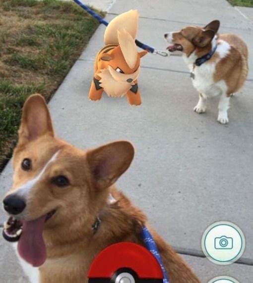 Pokemon Dog