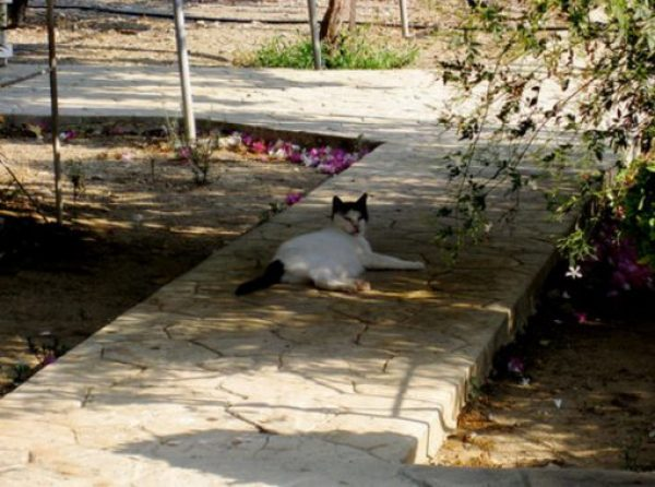 Holy Monastery of Saint Nicholas of the Cats, Akrotiri