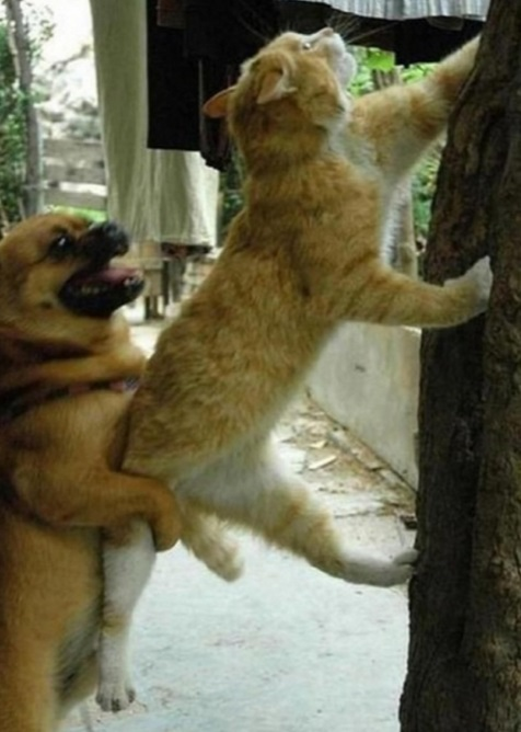 Dog Bullying Cat