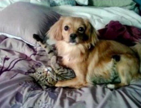 Dog Bullying Cat