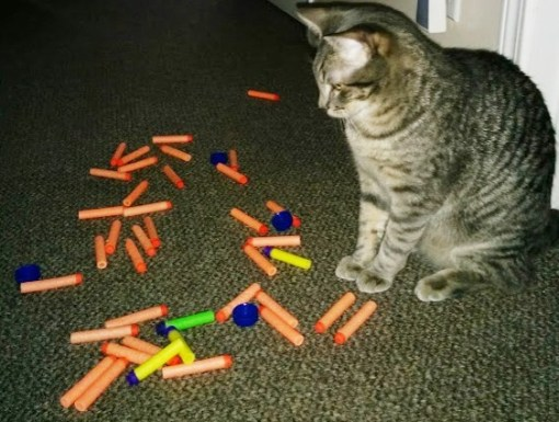 Top 10 Naughty Cats Who Steal And Stash Your Stuff