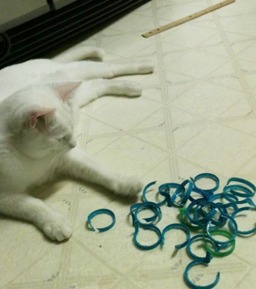 Cat With Hoarding Stash