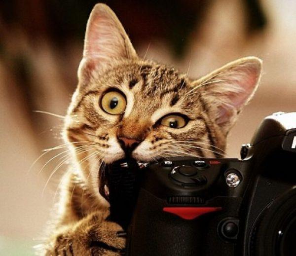 Cat Eating a Camera