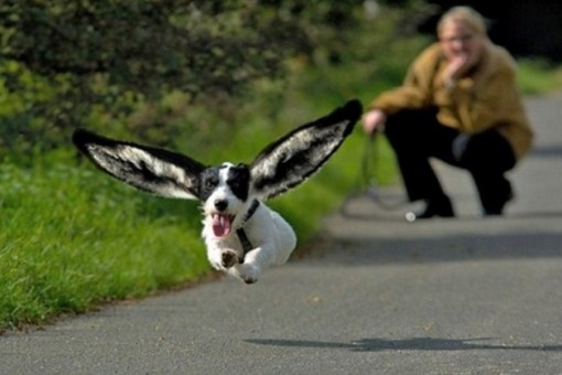 Top 10 Perfectly Captured Superhero Flying Dogs