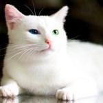 Top 10 Picture Purrfect & Totally Photogenic Beautiful Cats