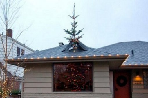Top 10 Amazing Facts About Christmas Trees You Need to Know
