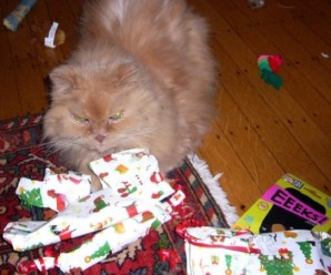 Top 10 Cats That Couldn't Wait Till Christmas Day