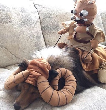 Dog Dressed as a Tusken Raider Bantha