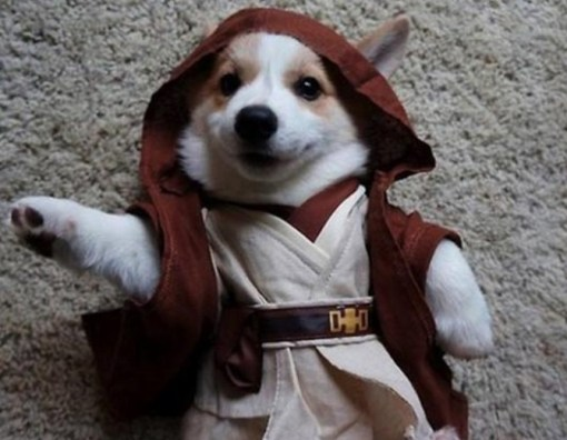 Dog Dressed as Obi-Wan Kenobi