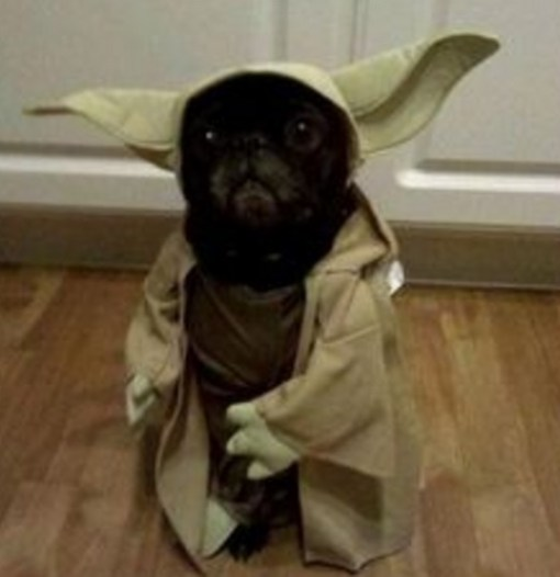 Dog Dressed as Yoda