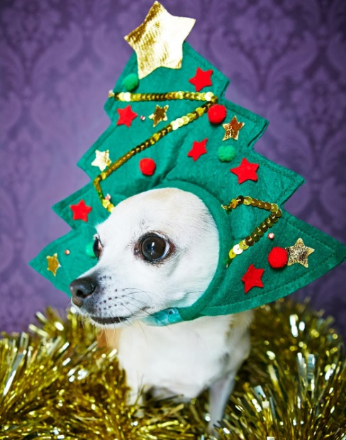 Dog Dressed as a Christmas Tree