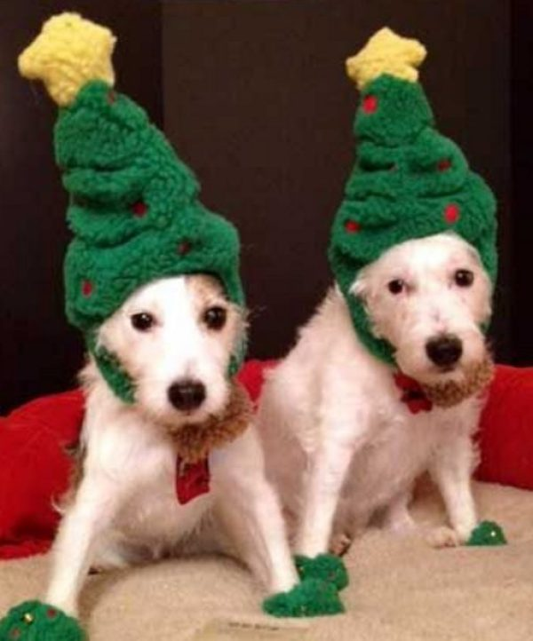 Dogs Dressed as a Christmas Trees