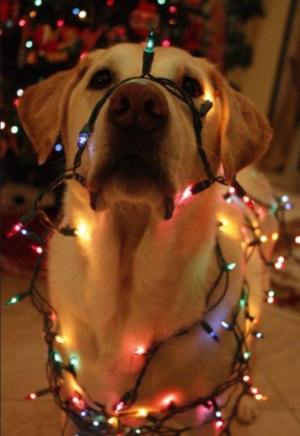 Dog Dressed as a Christmas Tree