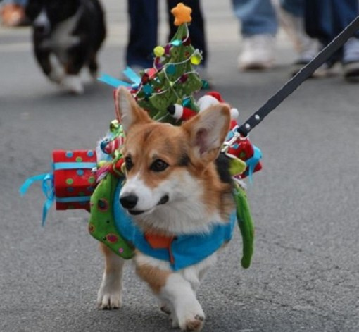 Top 10 Funny Festive Dogs Dressed as Christmas Trees