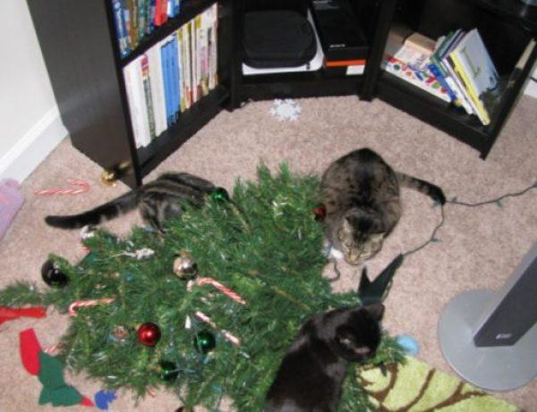 Cat Destroys Christmas Tree