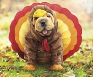 Top 10 Tasty Looking Dogs Dressed as Christmas Turkeys