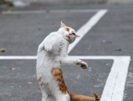 Cat Dancing Like Michael Jackson