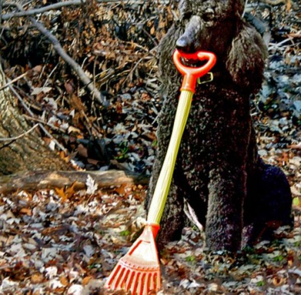 Dog Doing Some Gardening