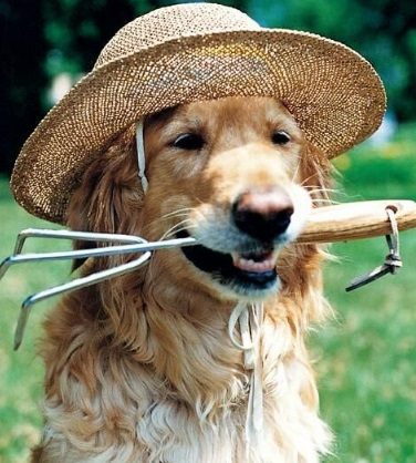 Dog Doing Some Gardening