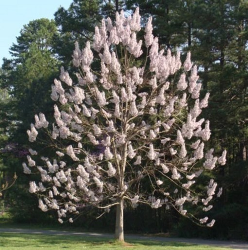 Fastest Growing Trees, United States