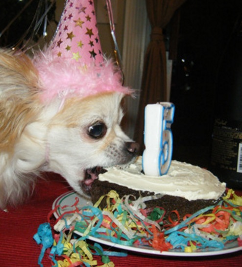 This Dog Loves Cake