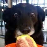 Top 10 Sponge Munching Dogs Who Love Cake