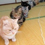 Top 10 Very Patient Cats Waiting in Queues