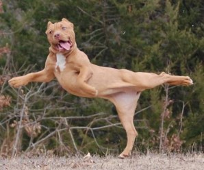 Top 10 Ways Your New Dog Will Embarrass You