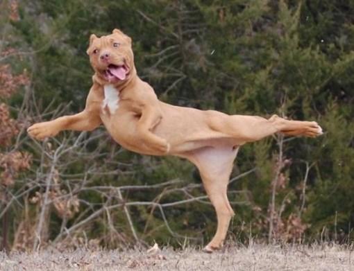 Dog Poses