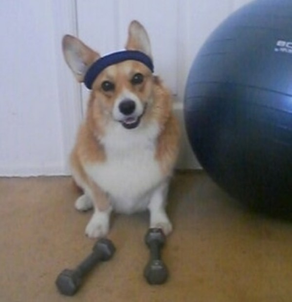 Make sure your dog gets plenty of exercise