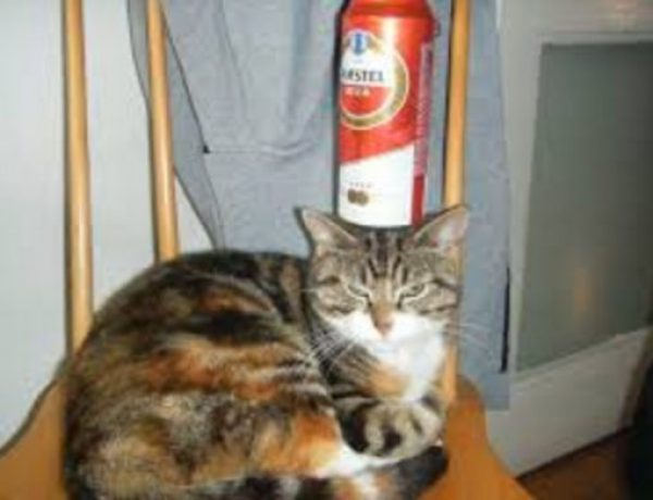 Cat Balancing Beer Can on Its Head